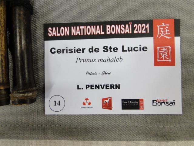 la passion du bonsai - Page 29 Dsc01646