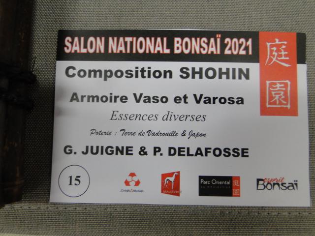 la passion du bonsai - Page 29 Dsc01648