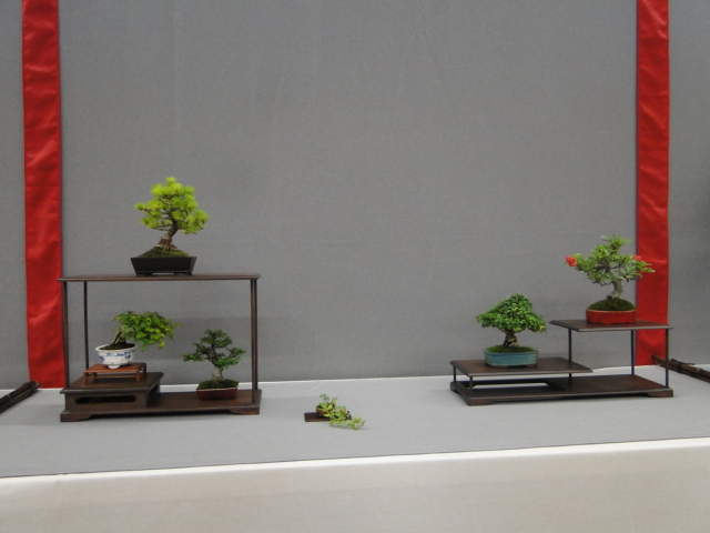 la passion du bonsai - Page 29 Dsc01649
