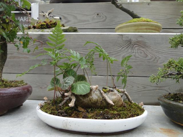 la passion du bonsai - Page 39 Dsc08103