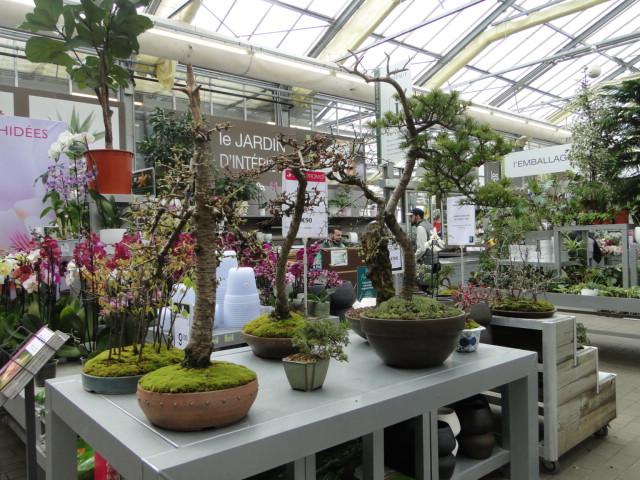 la passion du bonsai - Page 39 Dsc08109