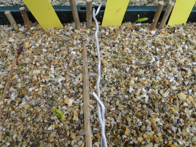 Terreau semis Dsc08200