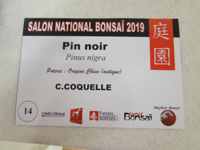 expo maulévrier 2019 - Page 5 Dsc08237