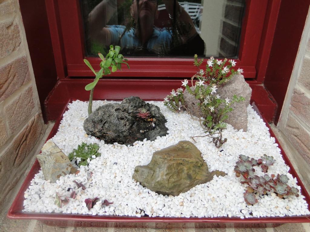 Présentation de tous nos cactus et succulentes  Dsc08424