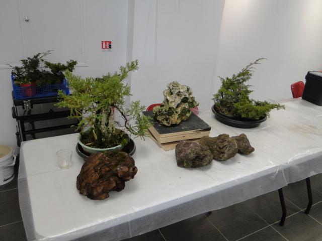 la passion du bonsai - Page 30 Dsc08566