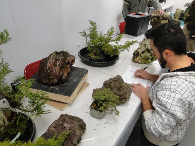 la passion du bonsai - Page 30 Dsc08568