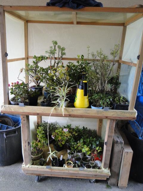 Hivernage des plantes  - Page 3 Dsc08577