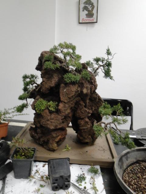 la passion du bonsai - Page 32 Dsc08584