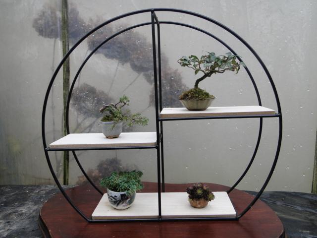 la passion du bonsai - Page 34 Dsc08588