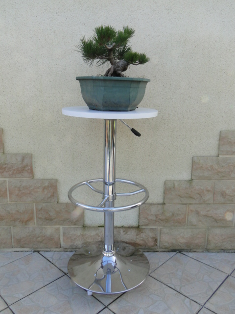 la passion du bonsai - Page 34 Dsc08661