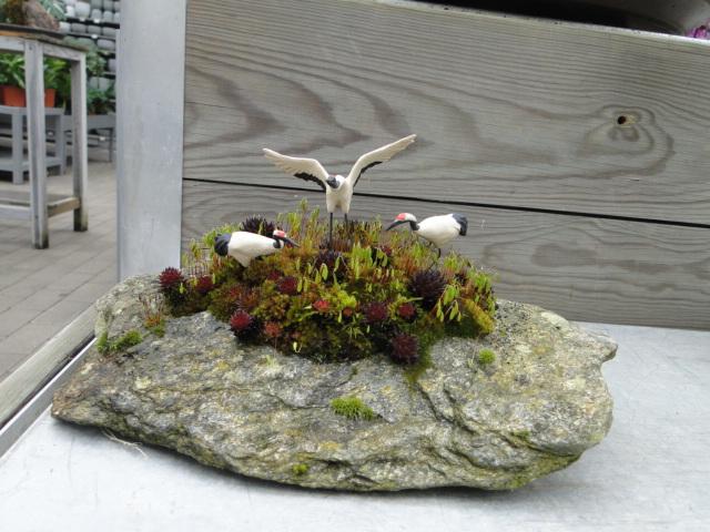la passion du bonsai - Page 39 Dsc08897
