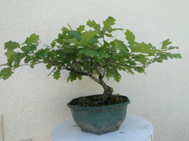 la passion du bonsai - Page 6 Dsc09168