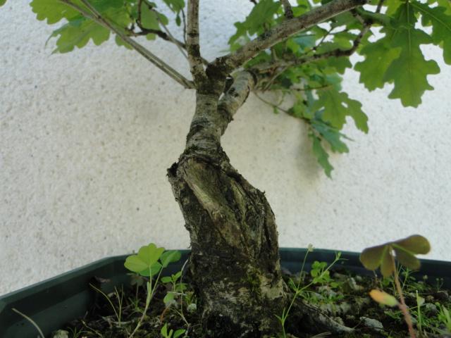 la passion du bonsai - Page 6 Dsc09253