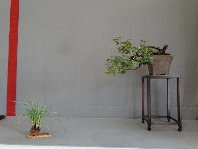 la passion du bonsai - Page 15 Dsc09290