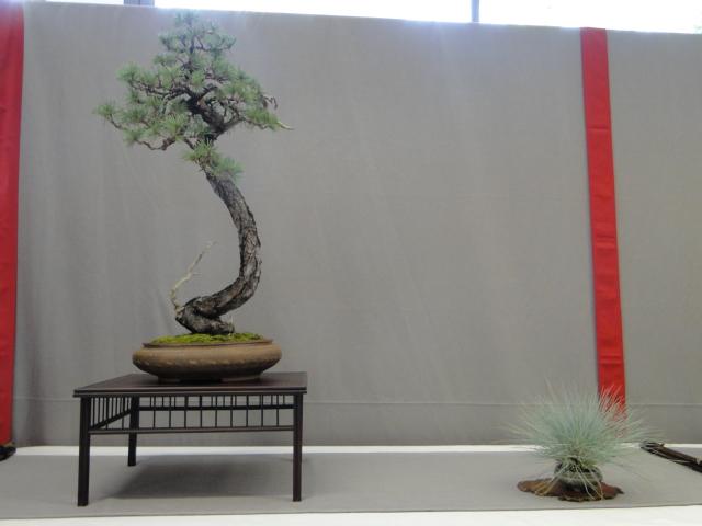 la passion du bonsai - Page 15 Dsc09293
