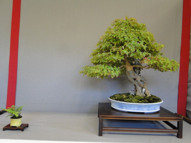 la passion du bonsai - Page 16 Dsc09299