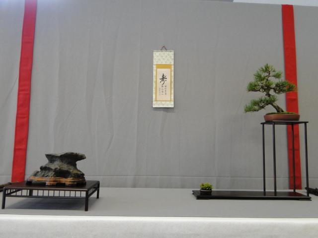 la passion du bonsai - Page 16 Dsc09305