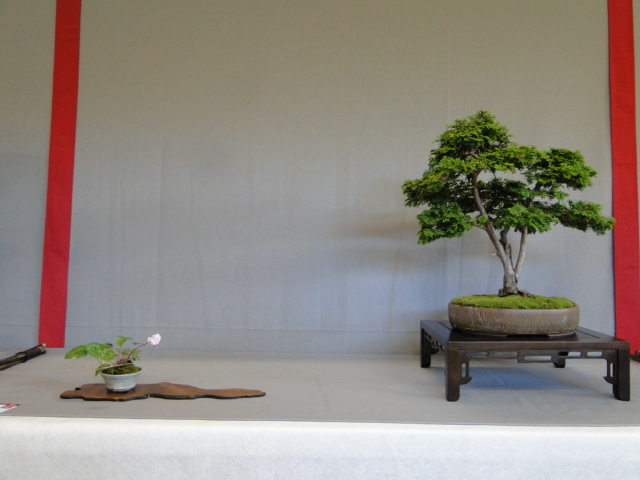 la passion du bonsai - Page 16 Dsc09307