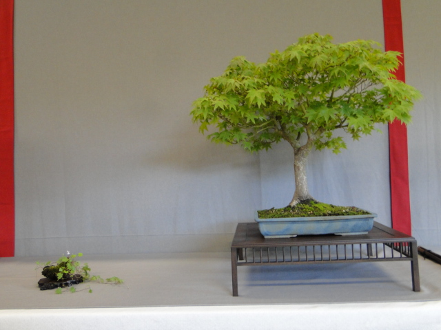 la passion du bonsai - Page 16 Dsc09309