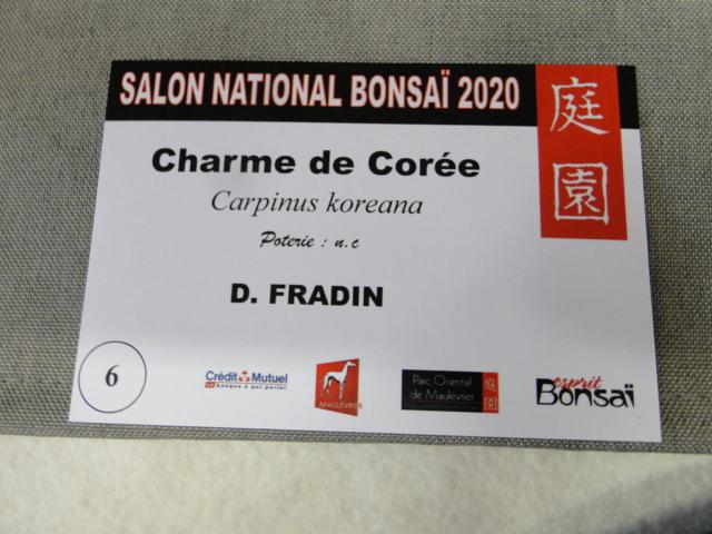 la passion du bonsai - Page 16 Dsc09360
