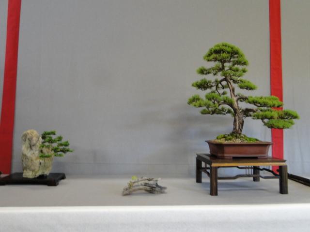 la passion du bonsai - Page 16 Dsc09363