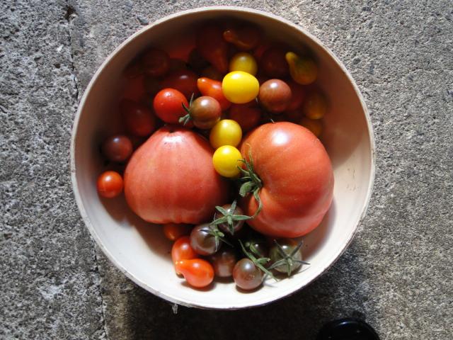 Tomates 2018 - Page 17 Dsc09417