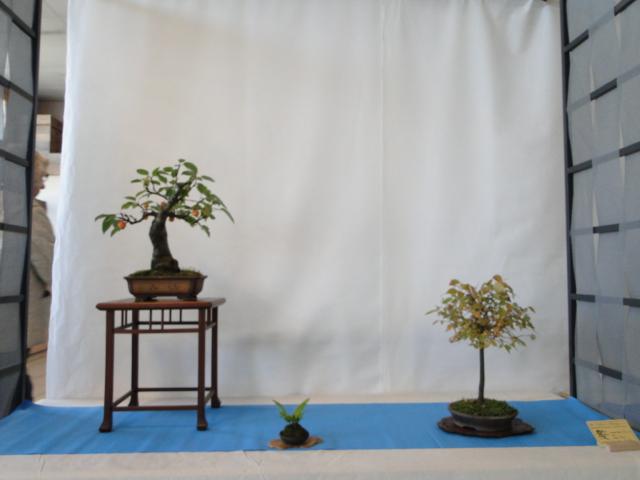 expo club bonsaï émeraude 2018  Dsc09570