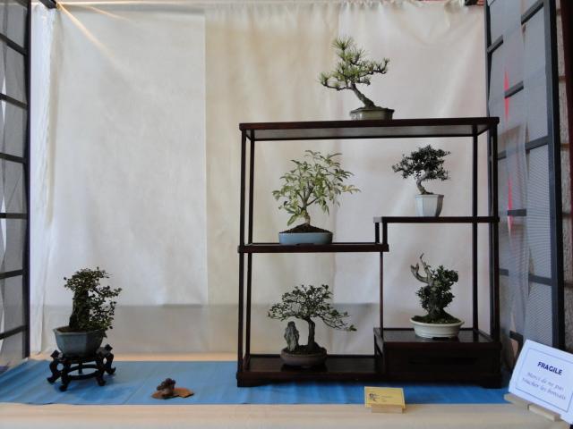 expo club bonsaï émeraude 2018  Dsc09572