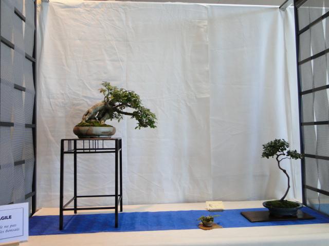 expo club bonsaï émeraude 2018  Dsc09574