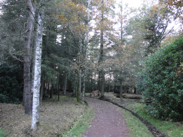 en forêt de Brocéliande Paimpont  - Page 2 Dsc09724