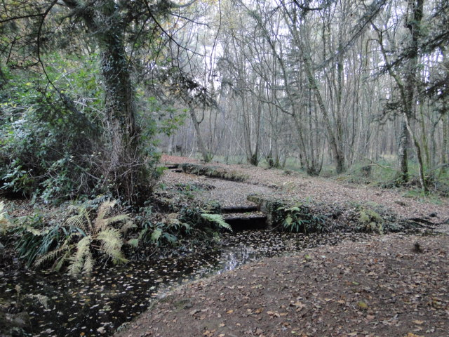 en forêt de Brocéliande Paimpont  - Page 2 Dsc09725