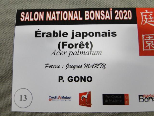 la passion du bonsai - Page 15 Dsc09792