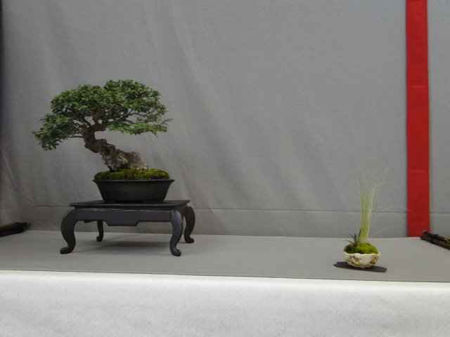 la passion du bonsai - Page 15 Dsc09795