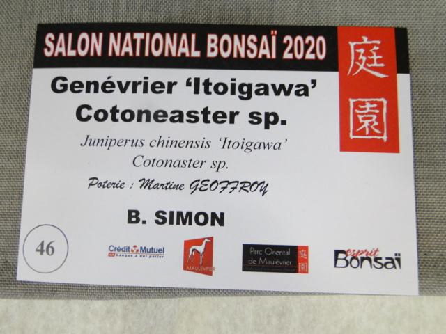 la passion du bonsai - Page 18 Dsc09893