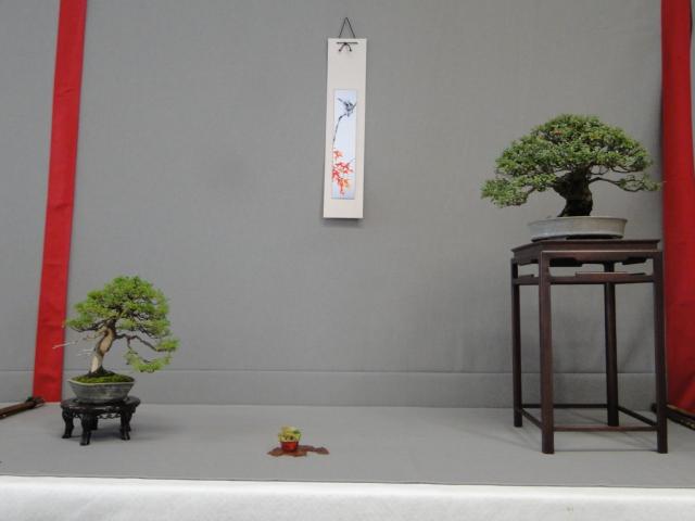 la passion du bonsai - Page 18 Dsc09894