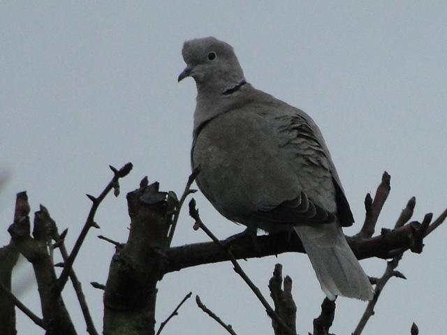 les oiseaux et petites bêtes au cours de nos balades - Page 23 Dsc09954