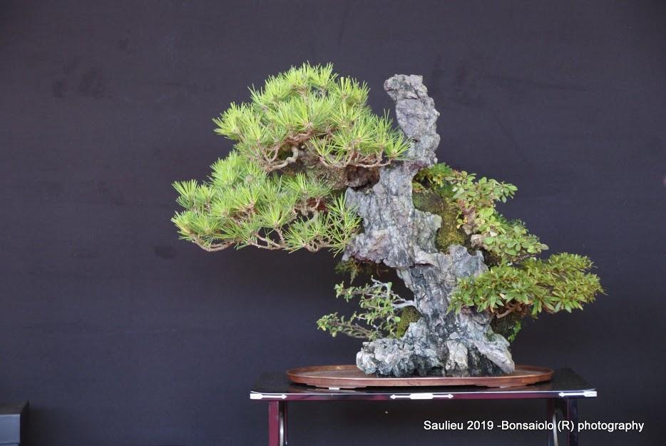la passion du bonsai - Page 33 Dsc09958
