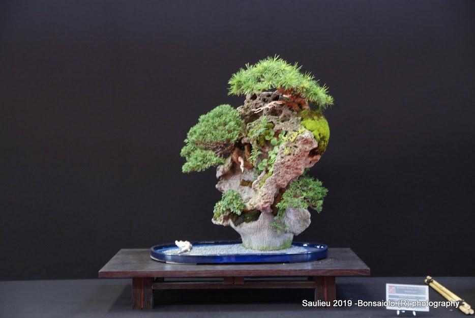 la passion du bonsai - Page 33 Dsc09959