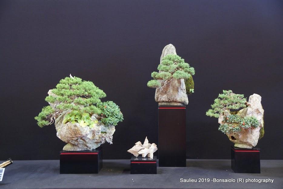 la passion du bonsai - Page 33 Dsc09960