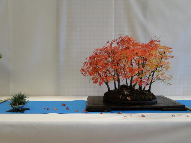 la passion du bonsai - Page 9 Xdsc0949