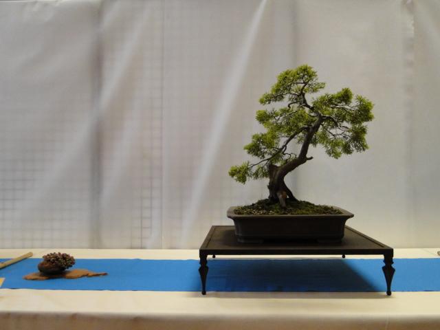expo club bonsaï émeraude 2018  - Page 2 Xxxdsc11
