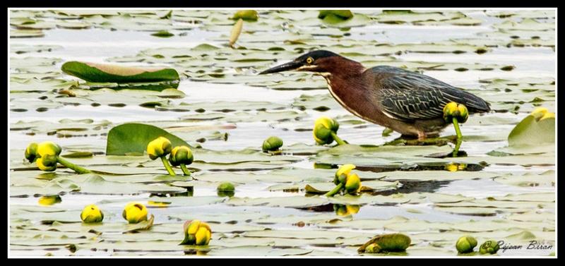 2 oiseaux a identifier.... Rej_7411