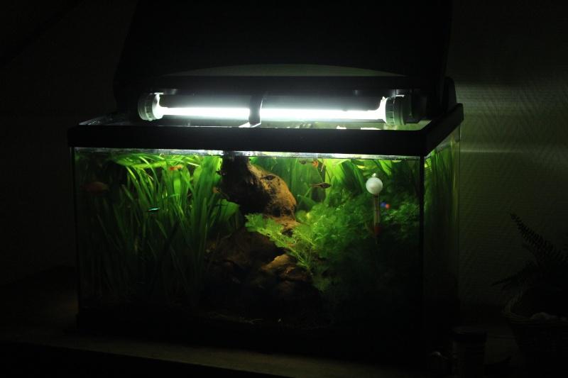 Bac 60 Litres Planté !  Img_2513