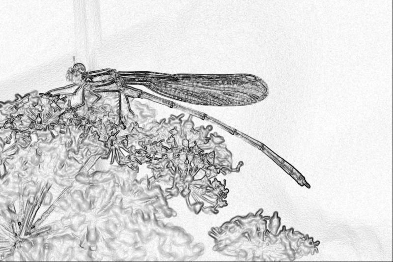 Jeux des insectes fossilisés 2 Img_5110