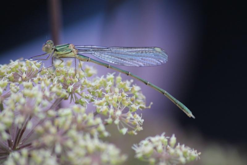 Jeux des insectes fossilisés 2 Img_5111