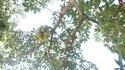 arbre à graine original?? Dsc05811
