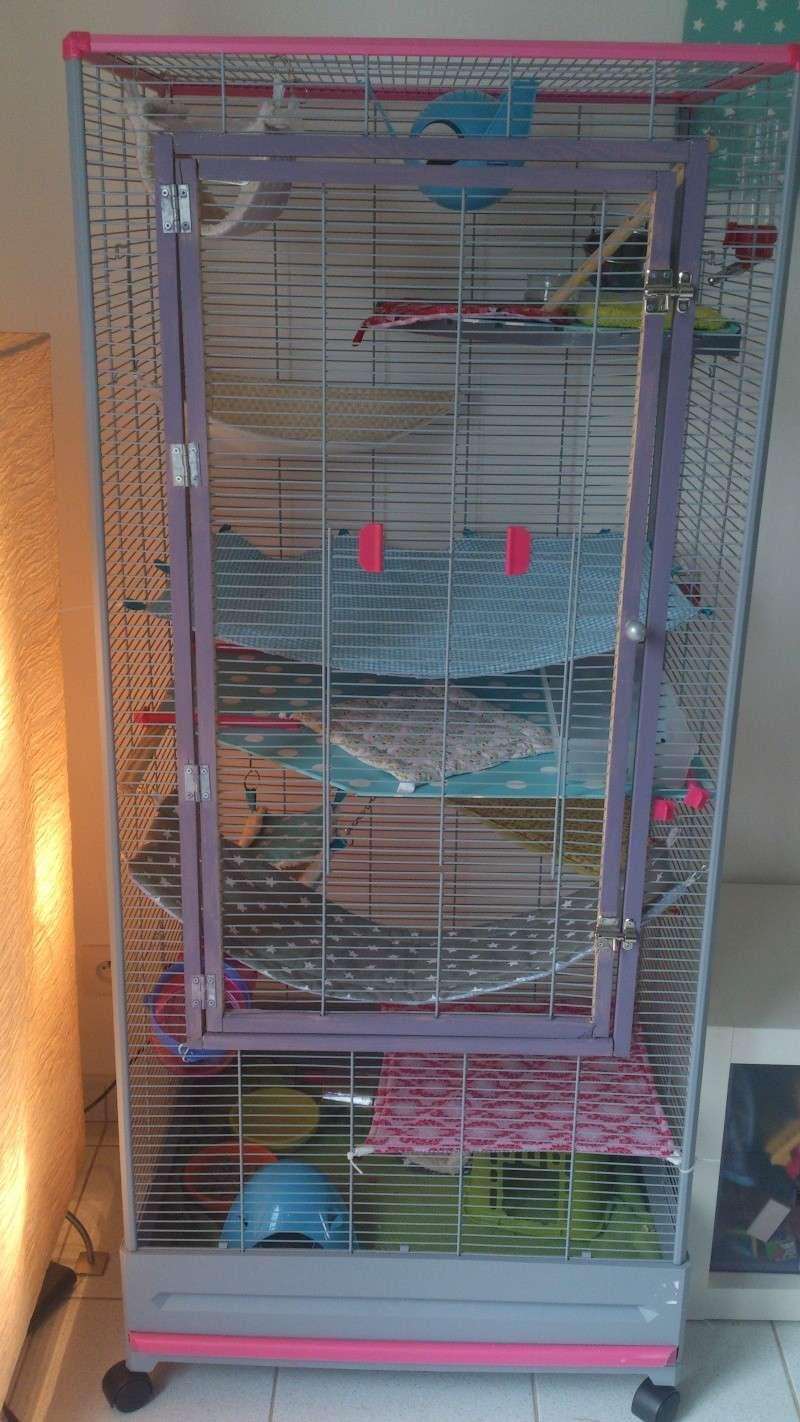 Encore des rats malheureux... Volier10