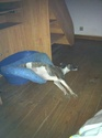 Posture originale pour dormir....et chez vous c'est comment??? - Page 5 Img_1312