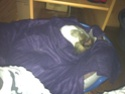 Posture originale pour dormir....et chez vous c'est comment??? - Page 5 Img_1510
