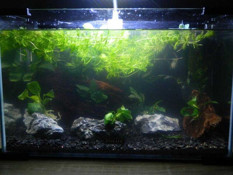 Bac 20 litres spécifique killies pour mon fils  Aquari10